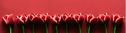 Скинали 'Тюльпаны бордо'
