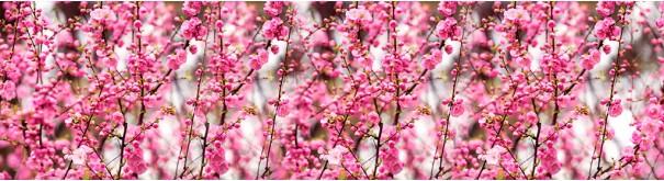 Скинали 'Ветви цветущей сакуры'