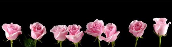 Скинали 'Розовые розы'