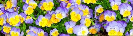 Скинали 'Цветы Анюты'