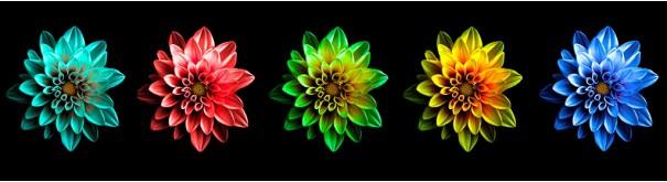 Скинали 'Разноцветные хризантемы'