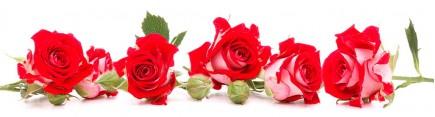 Скинали 'Алые розы'