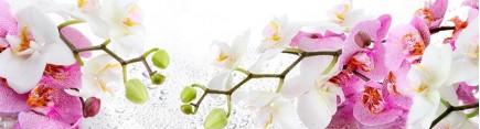 Скинали 'Свежая орхидея'