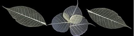 Скинали 'Сухие листья'