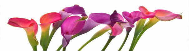 Скинали 'Яркие лилии'