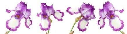 Скинали 'Цветущие ирисы'