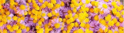 Скинали 'Луговые цветы'