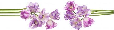 Скинали 'Полосатые тюльпаны'