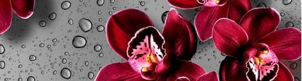Скинали 'Королева орхидей'