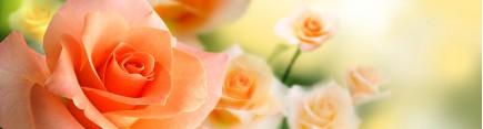 Скинали 'Нежные розы'