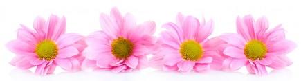 Скинали 'Розовые герберы'
