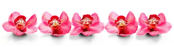 Скинали 'Цветы розовых орхидей'