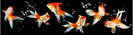 Скинали 'Золотые рыбки'