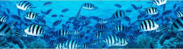 Скинали 'Стая рыбок'