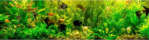 Скинали 'Речной аквариум'