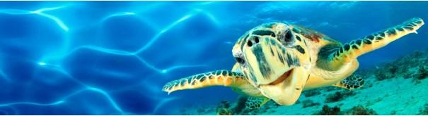 Скинали 'Большая морская черепаха'