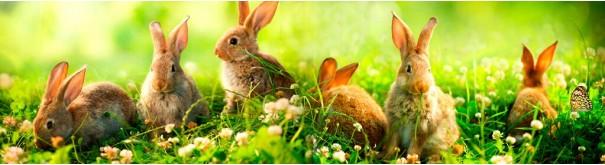 Скинали 'Семья кроликов'