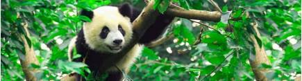 Скинали 'Панда на ветке'