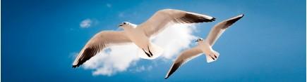 Скинали 'Чайки в небе'