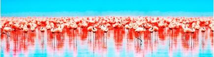Скинали 'Розовые фламинго'