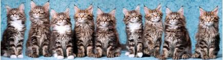 Скинали 'Все кошки серы'