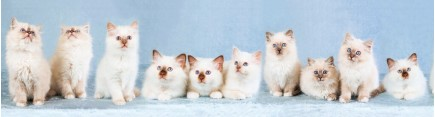 Скинали 'Котята с пятнышком'