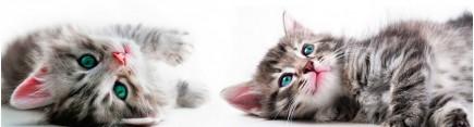 Скинали 'Котята с голубыми глазами'