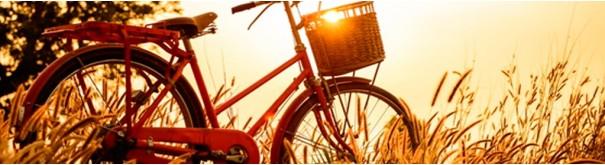 Скинали 'Солнечные вечер с велосипедом'