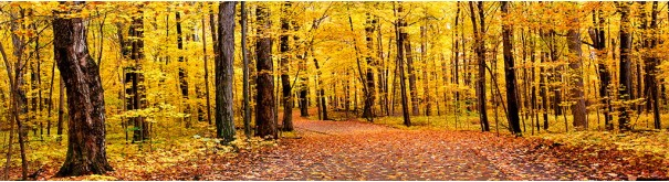Скинали 'Осенний лес'