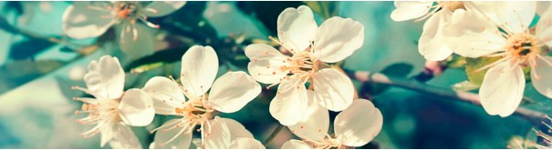 Скинали 'Цветущий сад'