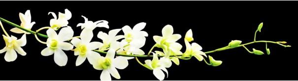 Скинали 'Ветка белой орхидеи'