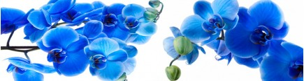 Скинали 'Волшебные орхидеи'