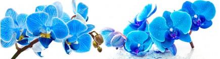 Скинали 'Голубые орхидеи'