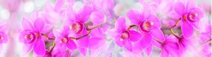 Скинали 'Яркие орхидеи'