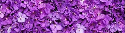 Скинали 'Яркие фиолетовые орхидеи'