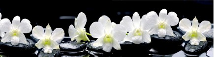 Скинали 'Дзен. Белые орхидеи'
