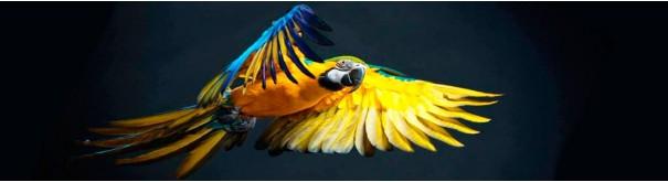 Скинали 'Золотистый ара'